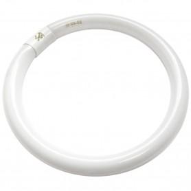 Fluorescente tubo Circular T9 TCF (Halofósforo) Luz Fría 6500K